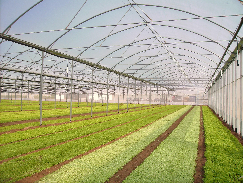 Solarii - Agronomia MENATWORK AGRICOL - Poza 2