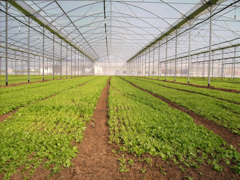 Solarii - Agronomia MENATWORK AGRICOL - Poza 4