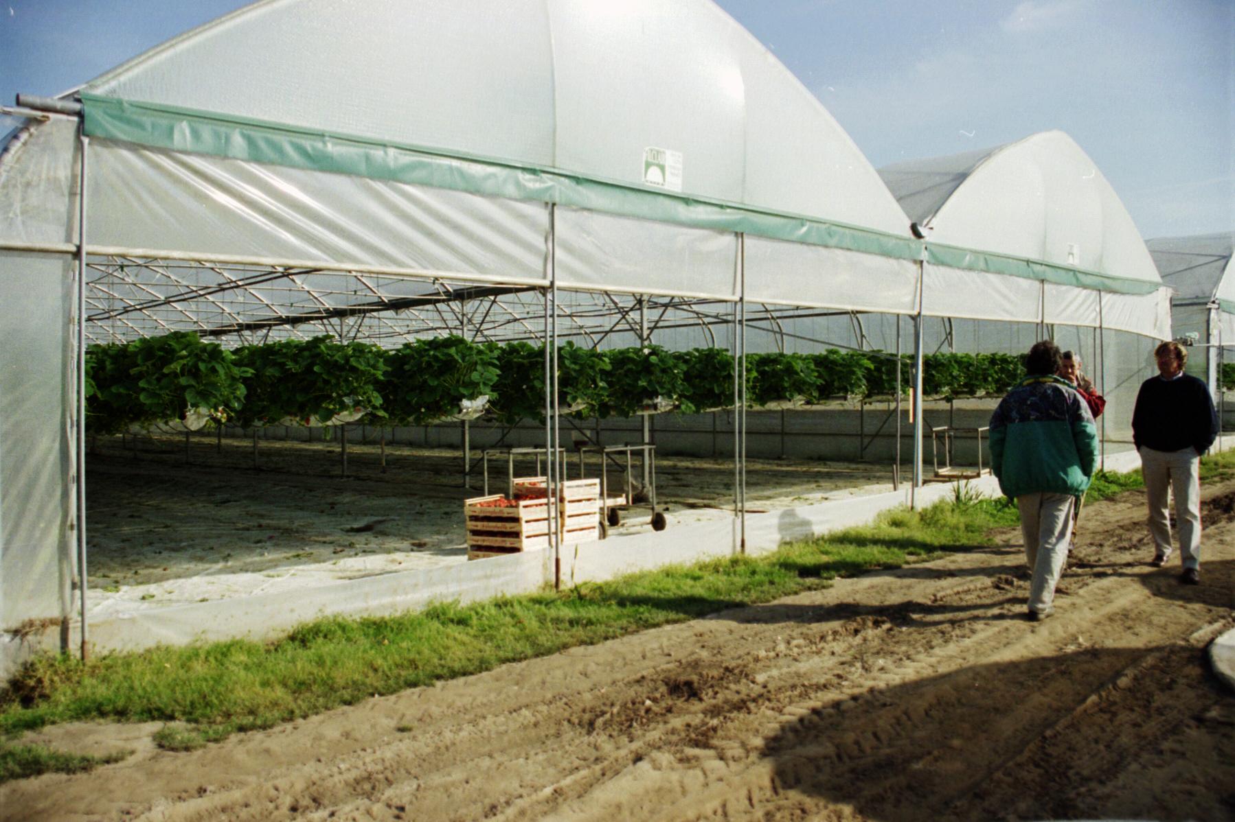 Solarii cu latime de 16.70m MENATWORK AGRICOL - Poza 2