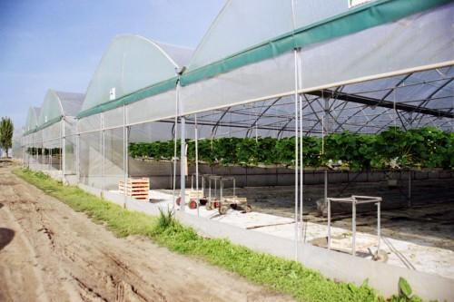 Solarii cu latime de 16.70m MENATWORK AGRICOL - Poza 3
