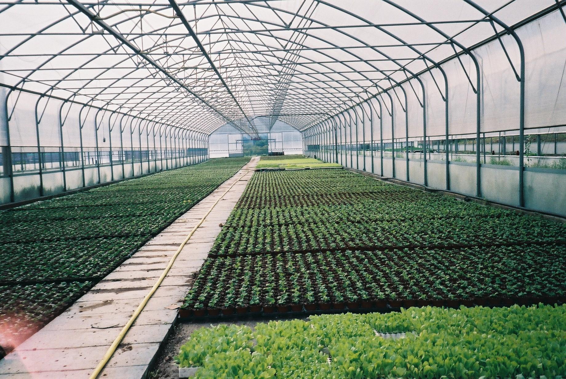 Solarii cu latime de 8.70m MENATWORK AGRICOL - Poza 12