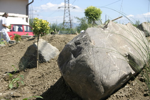 Lucrari, proiecte Amenajare gradina C - Baia Mare  - Poza 8