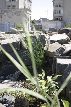 Lucrari de referinta Amenajare gradina C - Baia Mare  - Poza 11