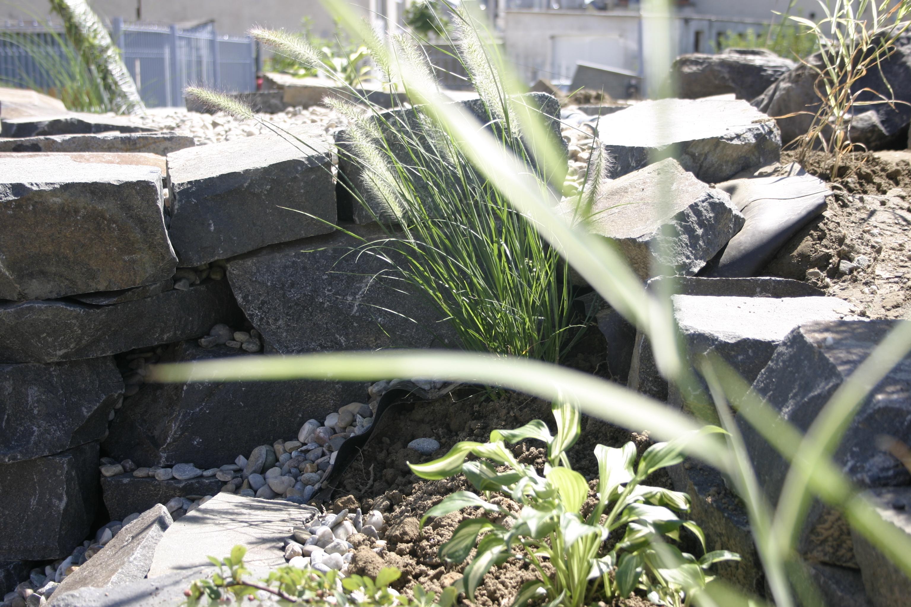 Amenajare gradina C - Baia Mare  - Poza 12