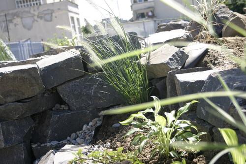 Lucrari, proiecte Amenajare gradina C - Baia Mare  - Poza 13