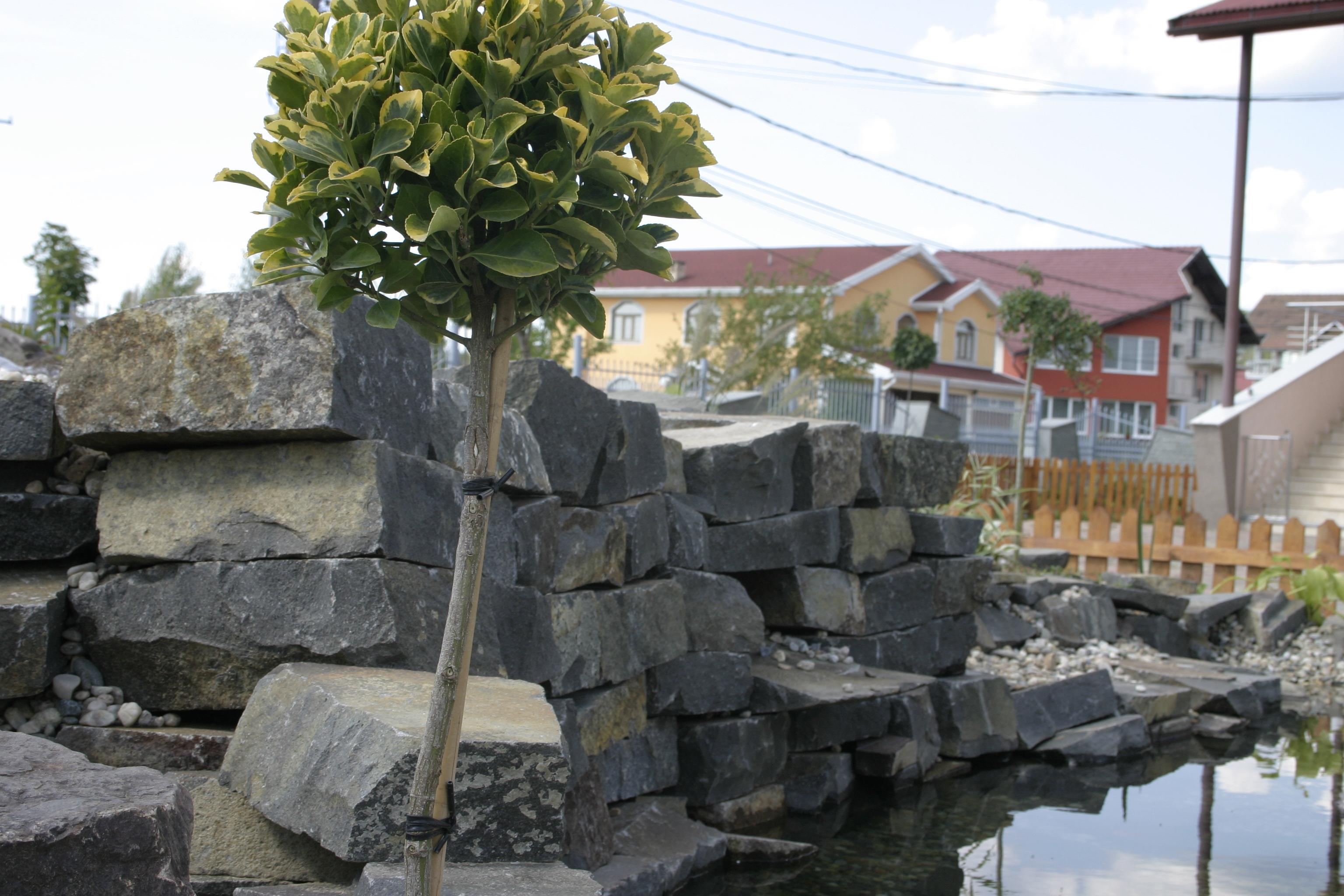 Amenajare gradina C - Baia Mare  - Poza 22