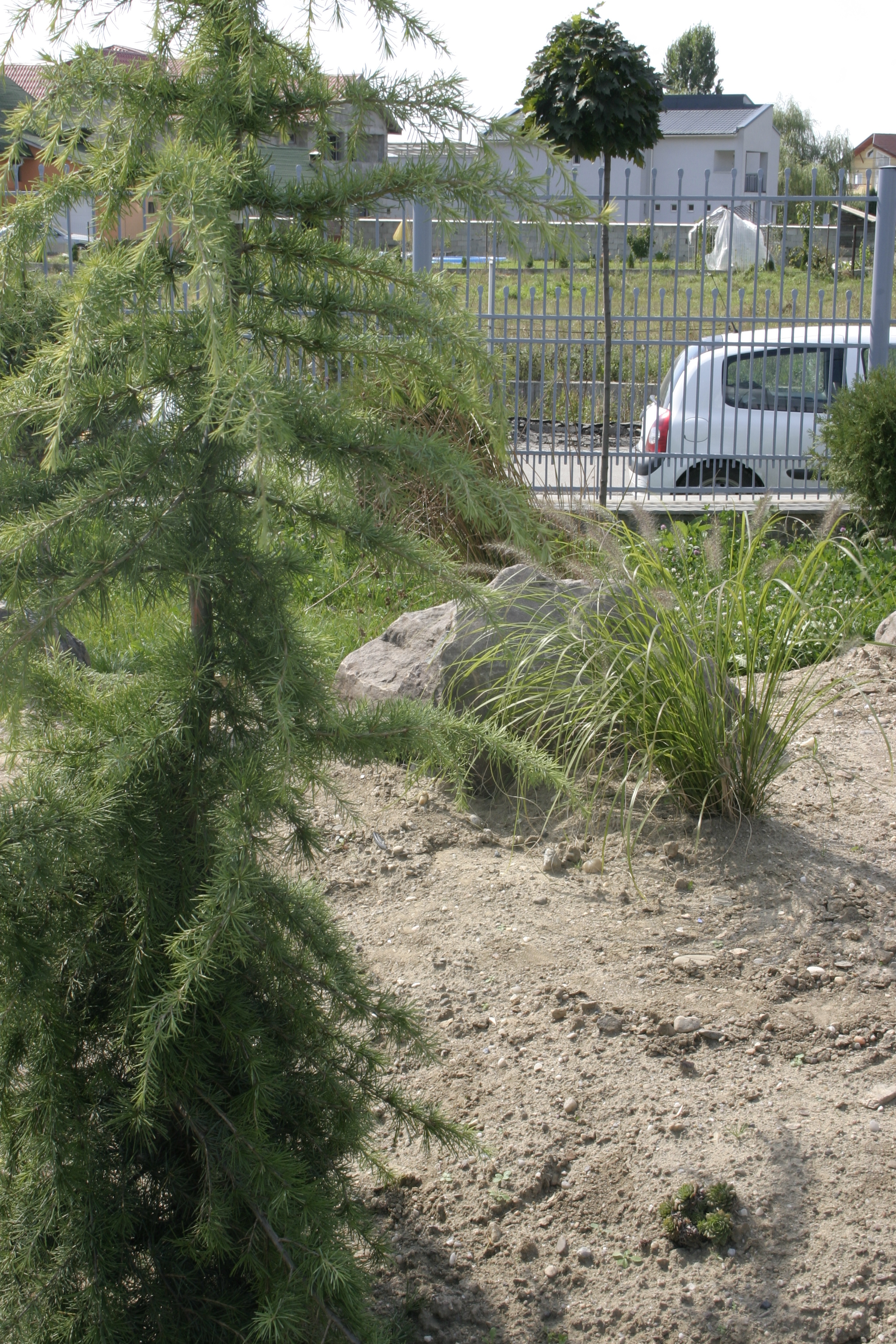 Amenajare gradina C - Baia Mare  - Poza 25