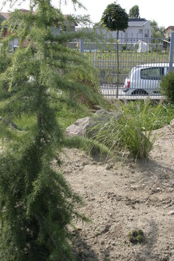 Lucrari, proiecte Amenajare gradina C - Baia Mare  - Poza 25