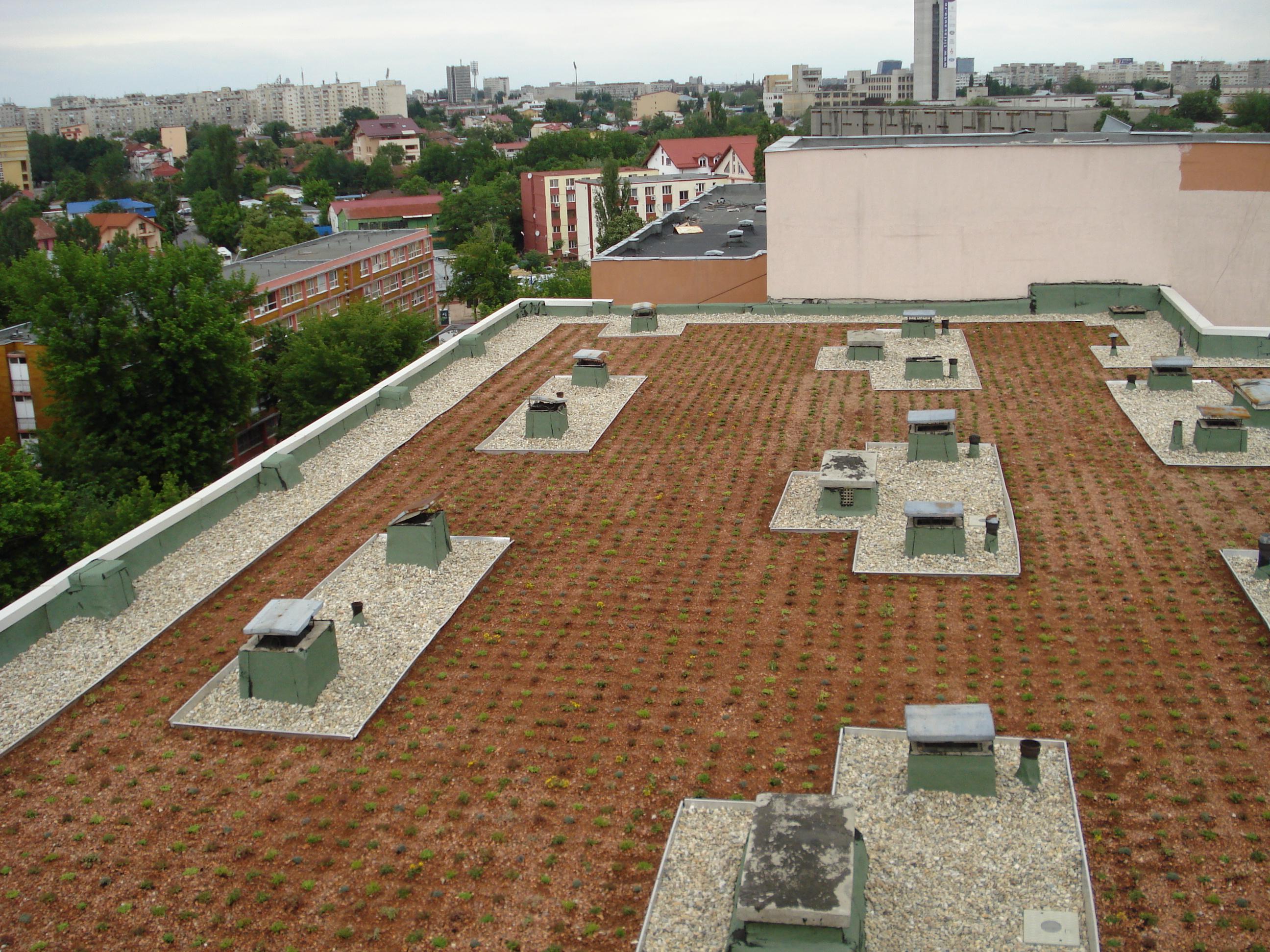 Acoperis verde pe acoperis existent Bucuresti SIMACEK Gardening - Poza 4