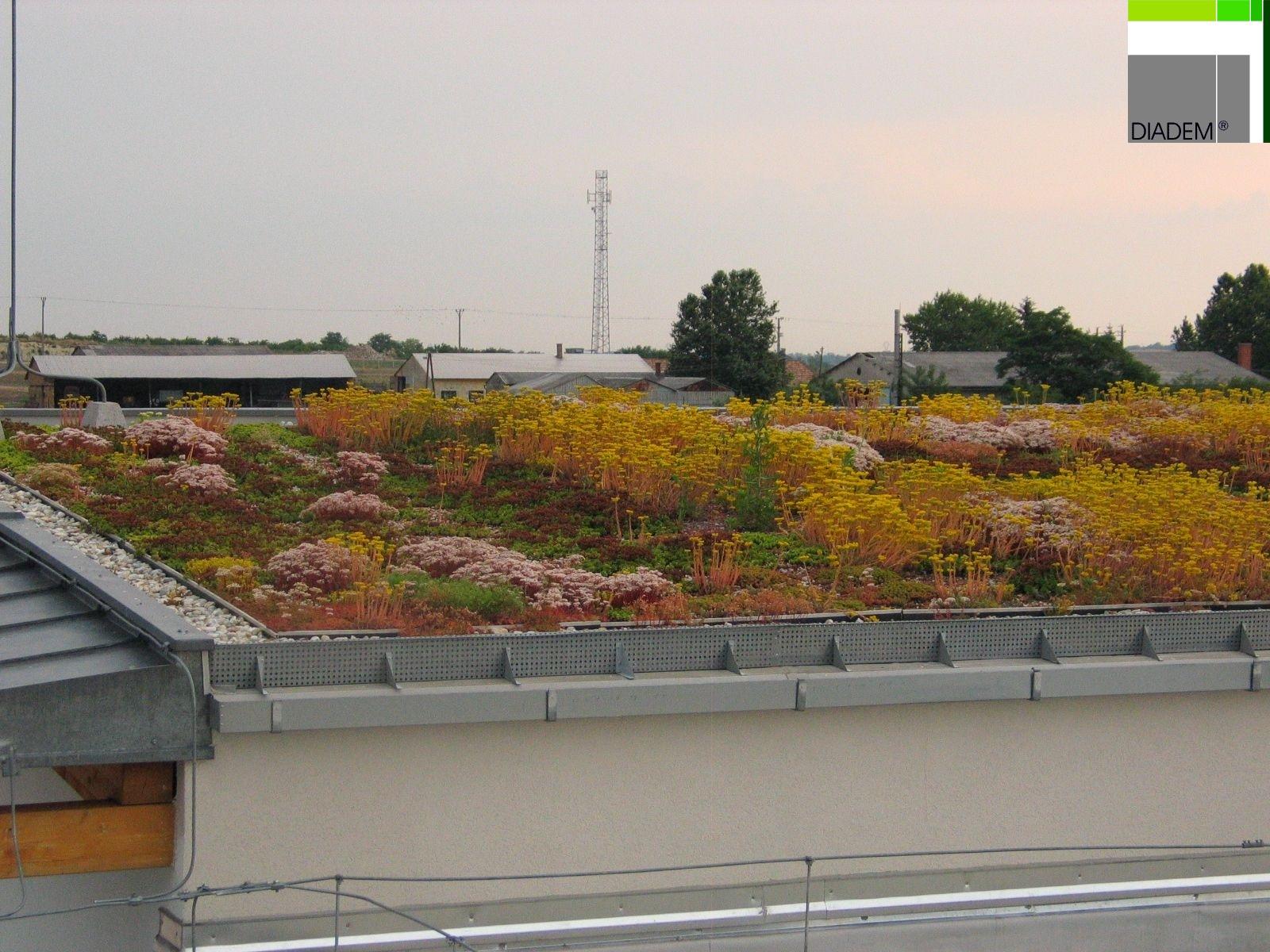 Acoperisuri Verzi  SIMACEK Gardening - Poza 3