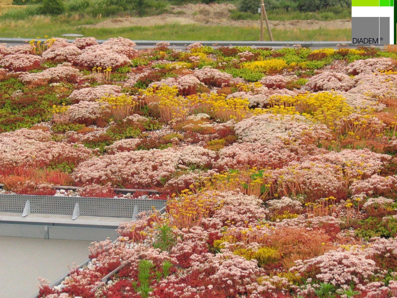 Acoperisuri Verzi  SIMACEK Gardening - Poza 5