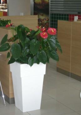 Amenajare centru comercial  - Poza 6