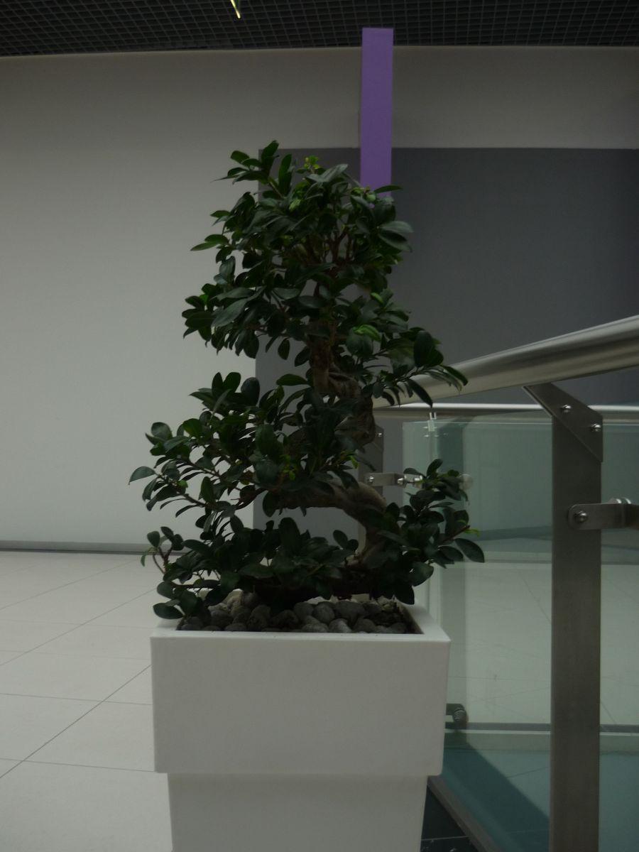 Amenajare centru comercial  - Poza 8