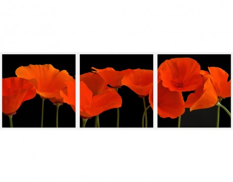 Tablouri set dual view - maci portocalii Home sweet - Poza 1