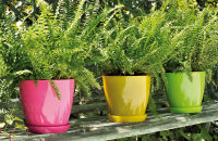 Ghivece pentru plante TELCOM SPA