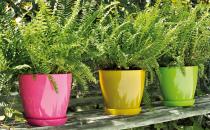 Ghivece pentru plante Telcomproduce ghivece din polietilena si teracota pentru flori . Ne detasam cu usurinta de concurenta prin proprietatile pe care le au acestea, astfel:Pentru polietilenase utilizeaza doar granule virgine, sunt excluse cele de calitate inferioara (reciclate);polietilena este tratata UV;coloranti de cea mai buna calitate, astfel ghivecele nu se decoloreaza in timp.Teracota arerezistenta la inghet conform UNI EN ISO 10545-12'';rezistenta crescuta la umiditate;garantam pentru argila utilizata.