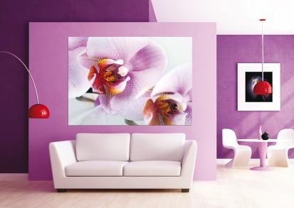 Fototapet camere de copii - Format Mic (160x115) / Fototapet Violet Orchid