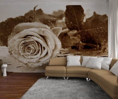 Fototapet decorativ Giant (360x254cm) / Fototapet cu Trandafir Alb Negru