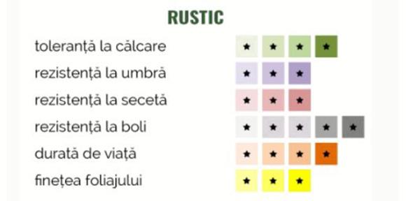 Schiță dimensiuni Gazon - Rustic