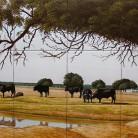 Cireada de tauri - Decoruri artistice din faianta pictata pentru living ARTELUX