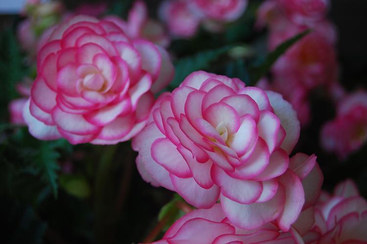 Poze de profil cu flori
