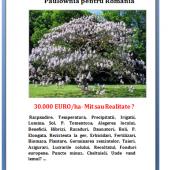 Paulownia pentru Romania