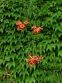 gard flori 3.jpg