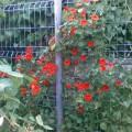 gard flori 2.jpg