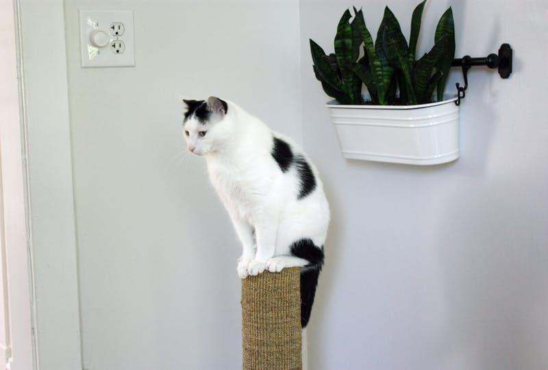 Cum să faci din apartament un loc mai distrativ pentru pisica ta - Cum să faci