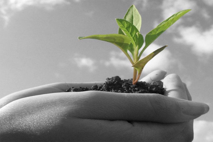 Sustenabil - Poze companie