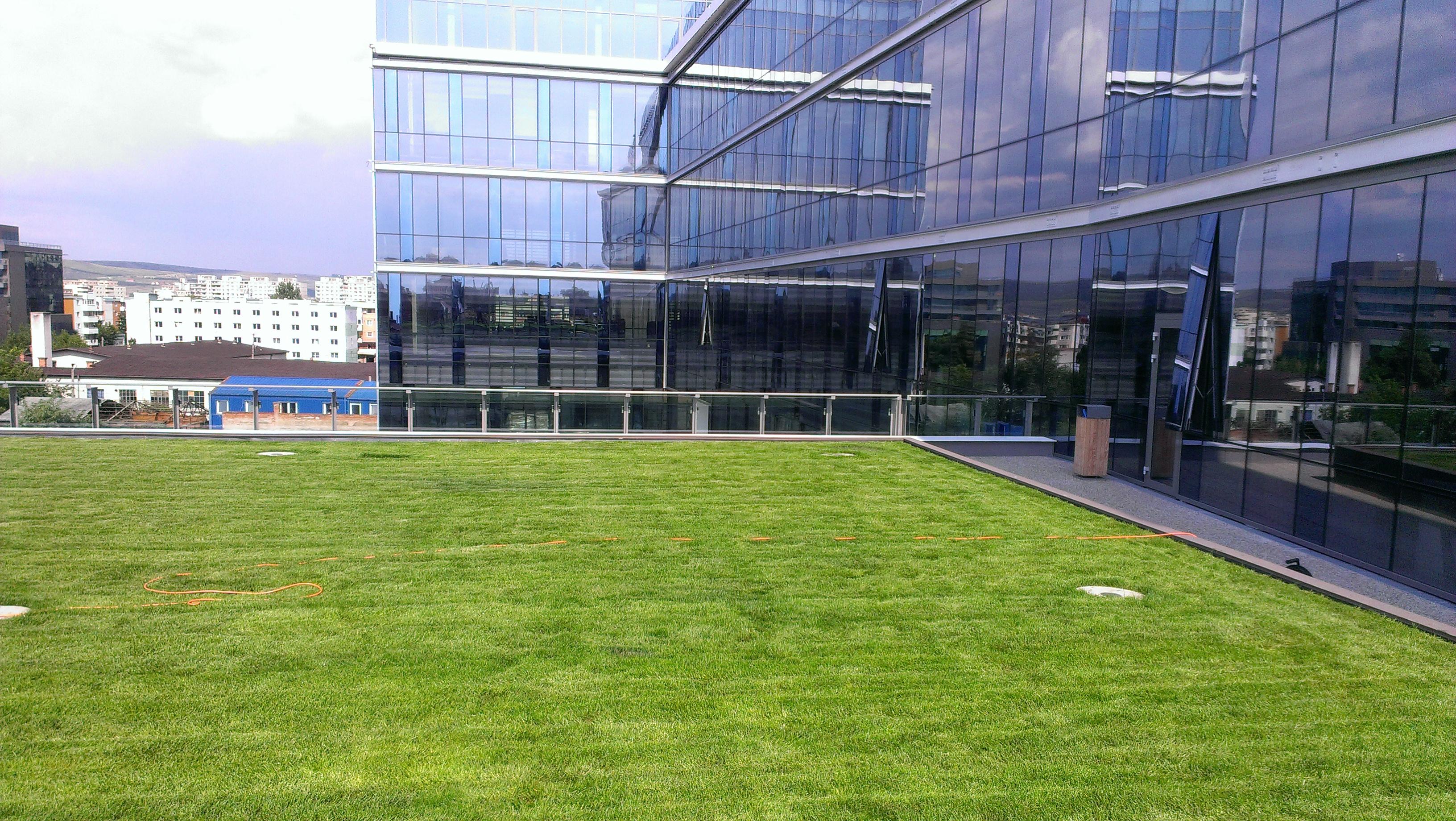 Terasa cu arbusti de la THE OFFICE se transforma in peluza! - Terasa cu arbusti de