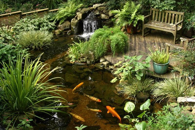 Grădina acvatică în amenajările peisagistice - Grădina acvatică în amenajările peisagistice