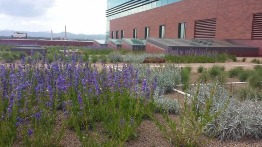 Încă un oraș care ar putea avea acoperișuri verzi pe clădiri - Încă un oraș care