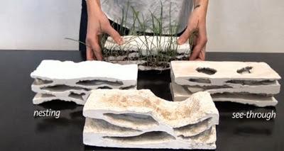 Zidurile obisnuite din caramida pot prinde viata - Zidurile obisnuite din caramida pot prinde viata