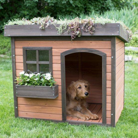 Home Design Ideas For Dogs: Utilizări Atipice Ale Lemnului Compozit