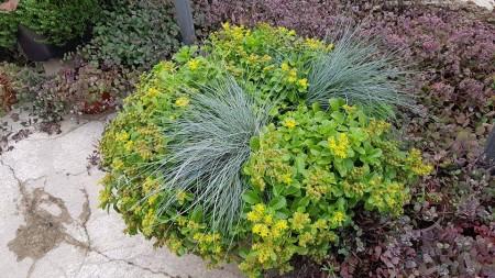 Plante de sezon la Biosolaris. Nu le rata! - Plante de sezon la Biosolaris. Nu le rata!