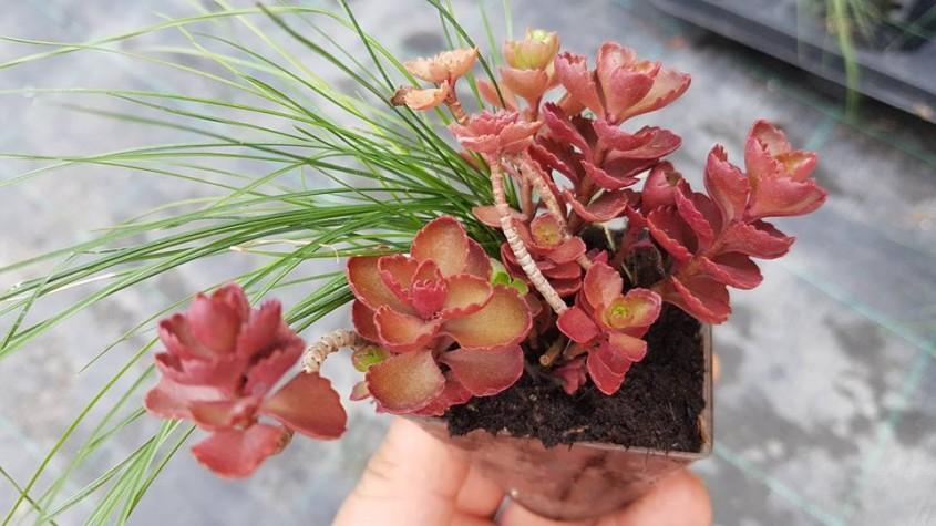 Plante de sezon la Biosolaris Nu le rata! - Plante de sezon la Biosolaris Nu le