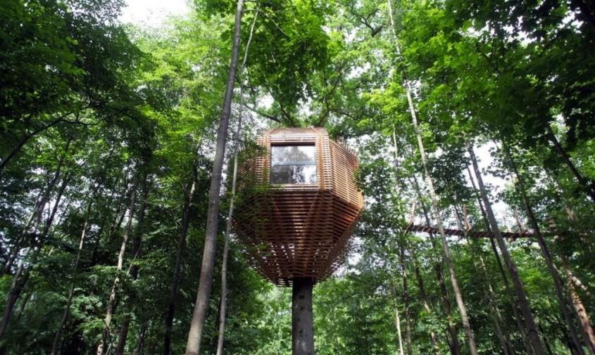 O casă în copac din Franța care are un interior surprinzător - O casă în copac