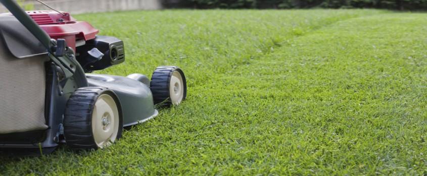Sfaturi pentru ingrijirea gradinii pe vreme caniculara - Sfaturi pentru îngrijirea grădinii pe vreme caniculară
