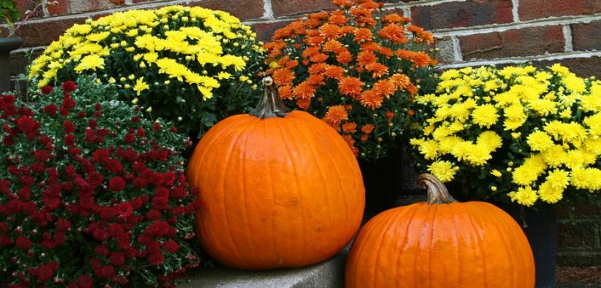 Crizanteme de toamna - Când toamna începe să se așeze peste grădină ce ai de făcut