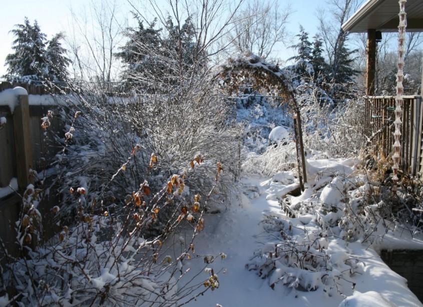 De ce este bine să nu faci curățenie de toamnă în grădina ta - De ce