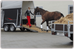 Placaj Tego antiderapant masini carat animale - Ce se poate realiza din placa Tego antiderapanta