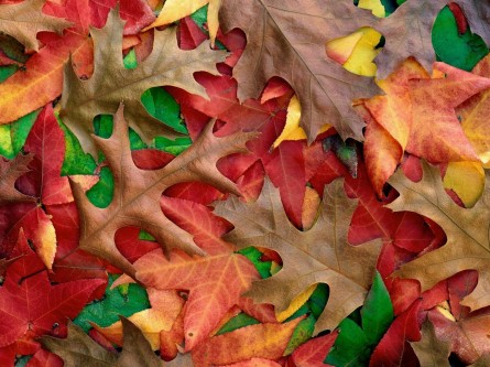Despre forme, culori si texturi in peisaj - Despre forme, culori si texturi in peisaj