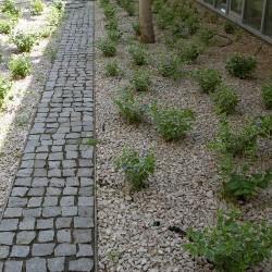 Piatra Cubica Granit Gri Sare si Piper Natur 5 x 5 x 5 cm (1 tona = 8-9 mp) - Piatra naturala decorativa kavala ardezie