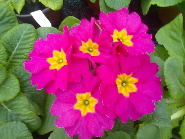 Flori frumoase in serele Biosolaris Producator de Plante Haideti sa le vedeti! - Flori frumoase in