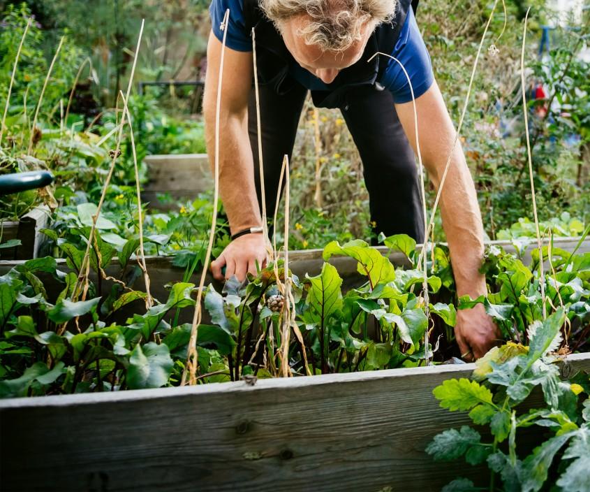Plantarea legumelor - Luna februarie în gradină – ce ai făcut?