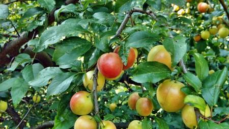 Corcoduse - Când toamna începe să se așeze peste grădină: ce ai de făcut la începutul lui septembrie?