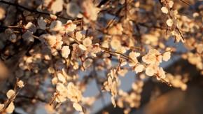 Arbori de inalta calitate -  Twinmotion
