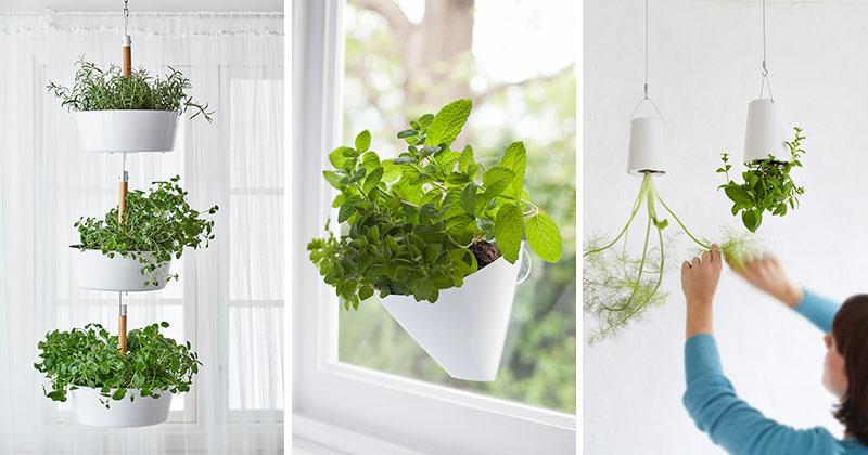 Idei Pentru Gradina Din Apartament Plante Agatate De