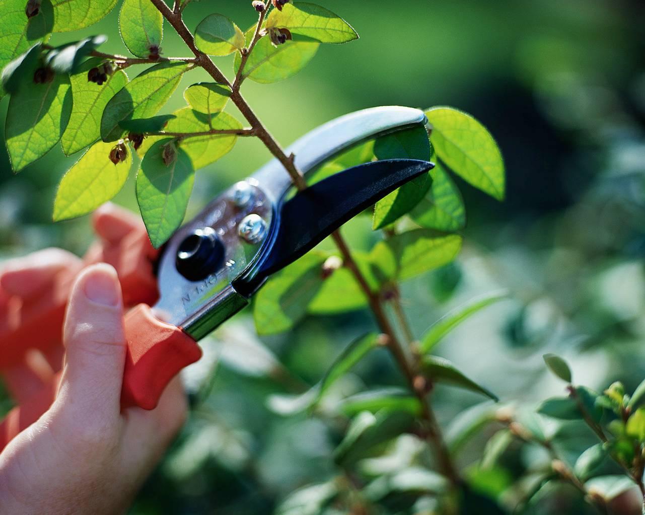 Taiarea pomilor fructiferi - Luna februarie în gradină – ce ai de făcut?